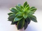 nature, plant, pot
