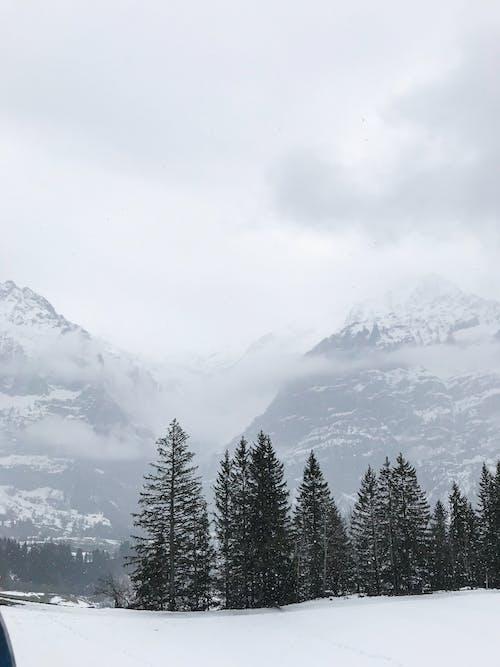 Imagine de stoc gratuită din arbore, ceață, congelat