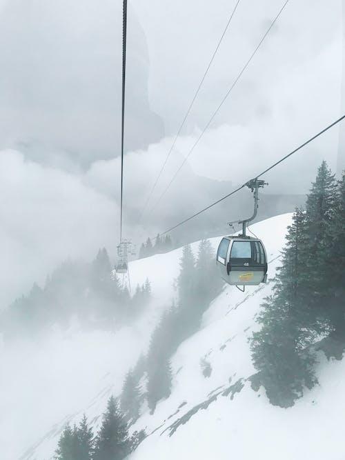 Imagine de stoc gratuită din arbore, călătorie, ceață