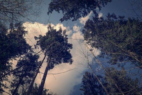 分支機構, 天性, 天空, 日光 的 免费素材照片