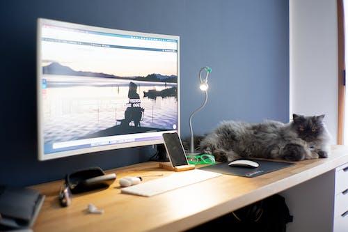 Immagine gratuita di animale domestico, banco, gatto