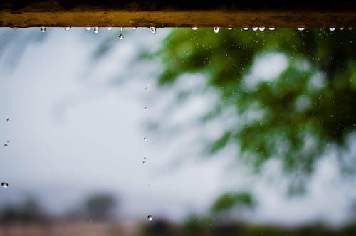 Kostenloses Stock Foto zu frau, hölzern, makro, regen