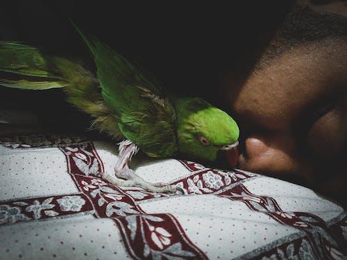 Free stock photo of animal image, animal lover, cinematic