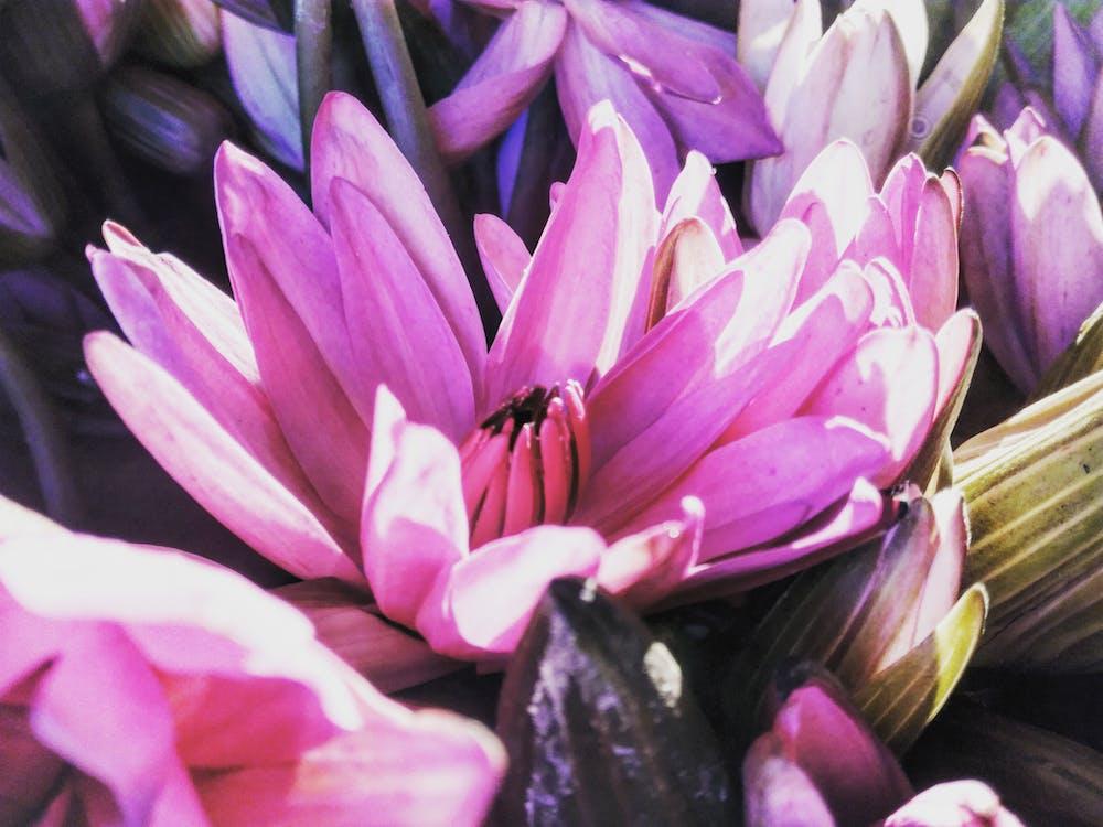botaniczny, flora, jasny