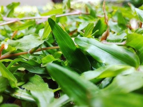 Безкоштовне стокове фото на тему «трава»