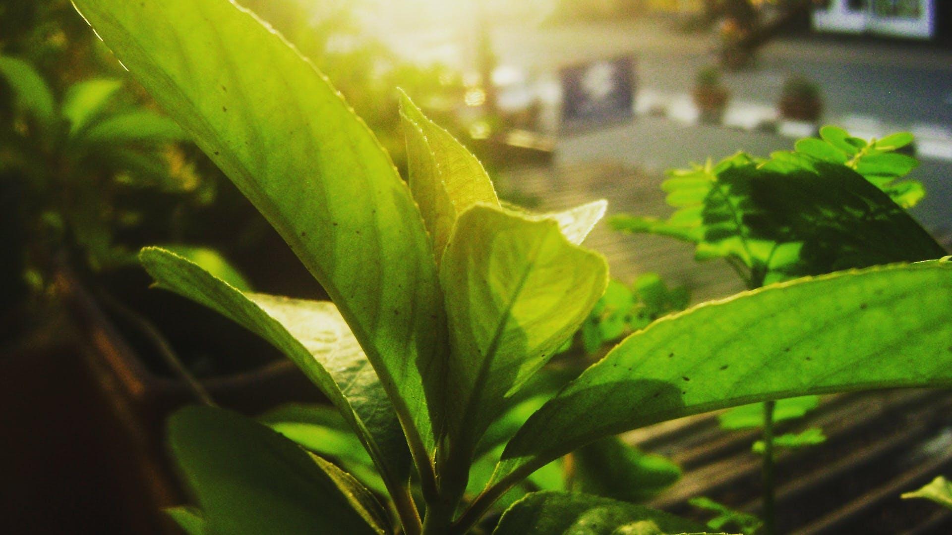Free stock photo of autumn leaf, morning