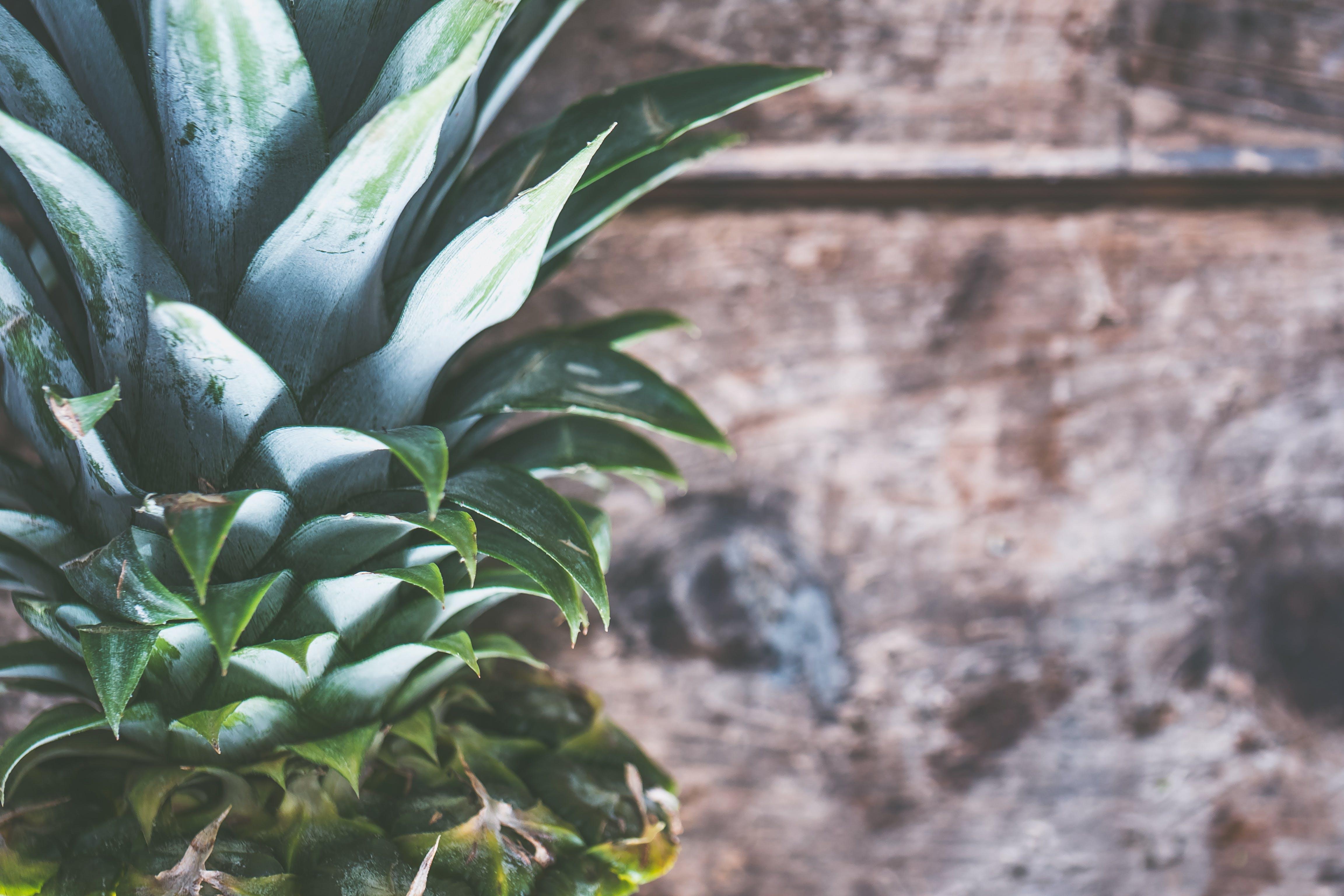 Gratis lagerfoto af ananas, close-up, eksotisk, farve