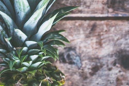 エキゾチック, オーガニック, テクスチャ, トロピカルの無料の写真素材