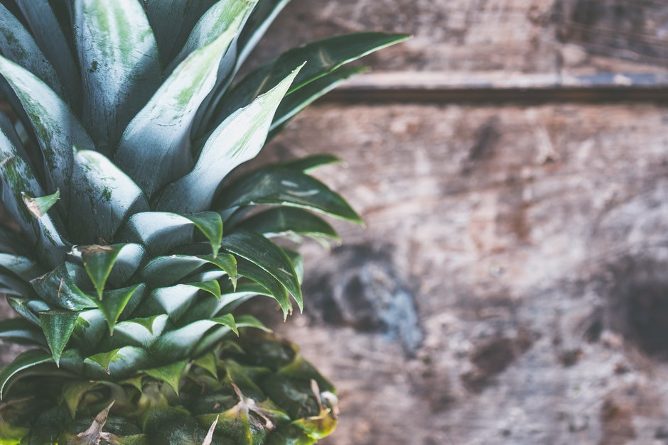 ananas, blatt, draußen