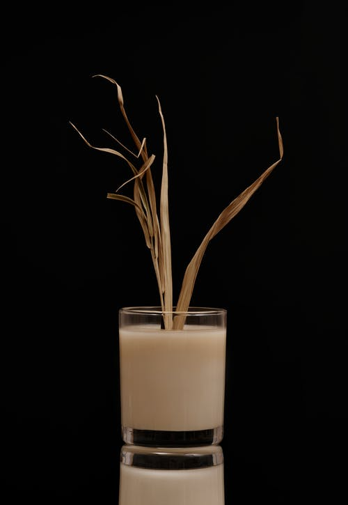 Dry grass in wax candle in studio