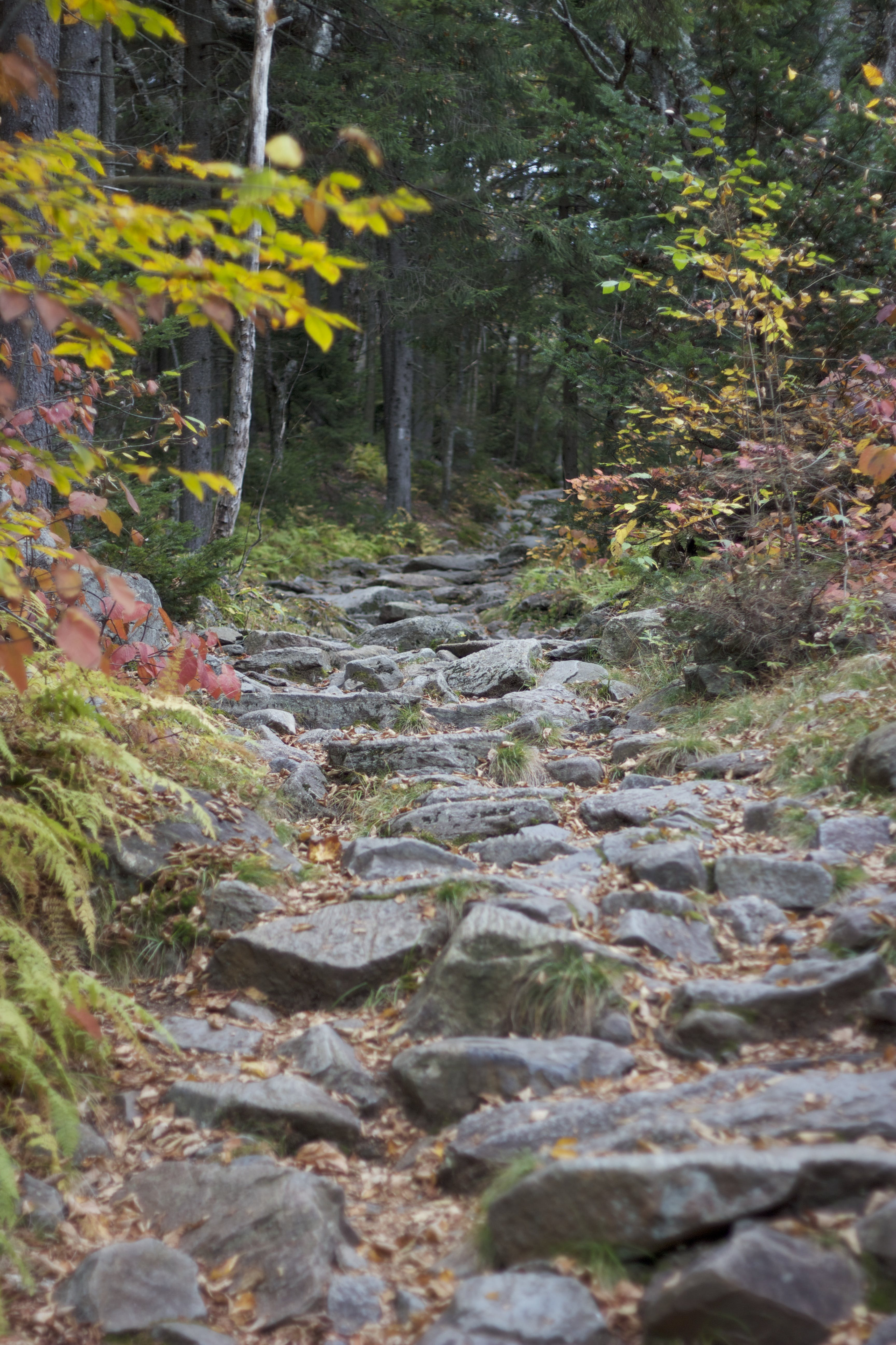 Rocky Pathway Surrounded by Trees