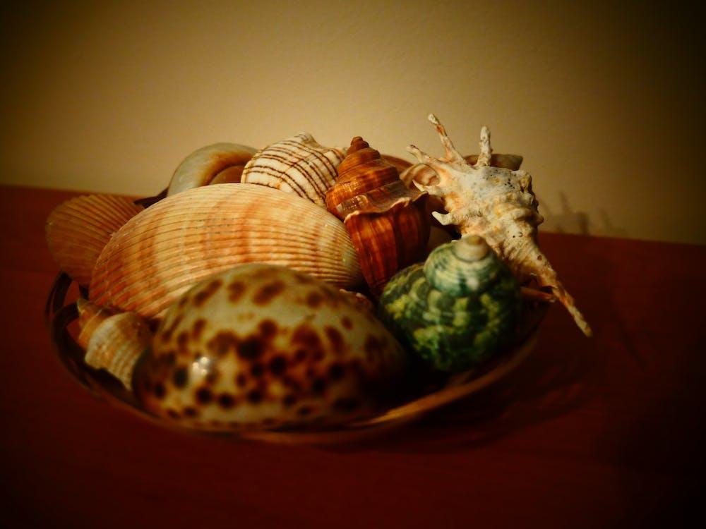 Free stock photo of shells