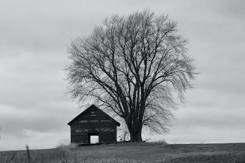 Grayscale Photo of a Leafless Tree Near Barn House