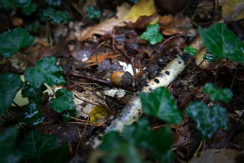 Základová fotografie zdarma na téma břečťan, fotografie přírody, les, lesní půda