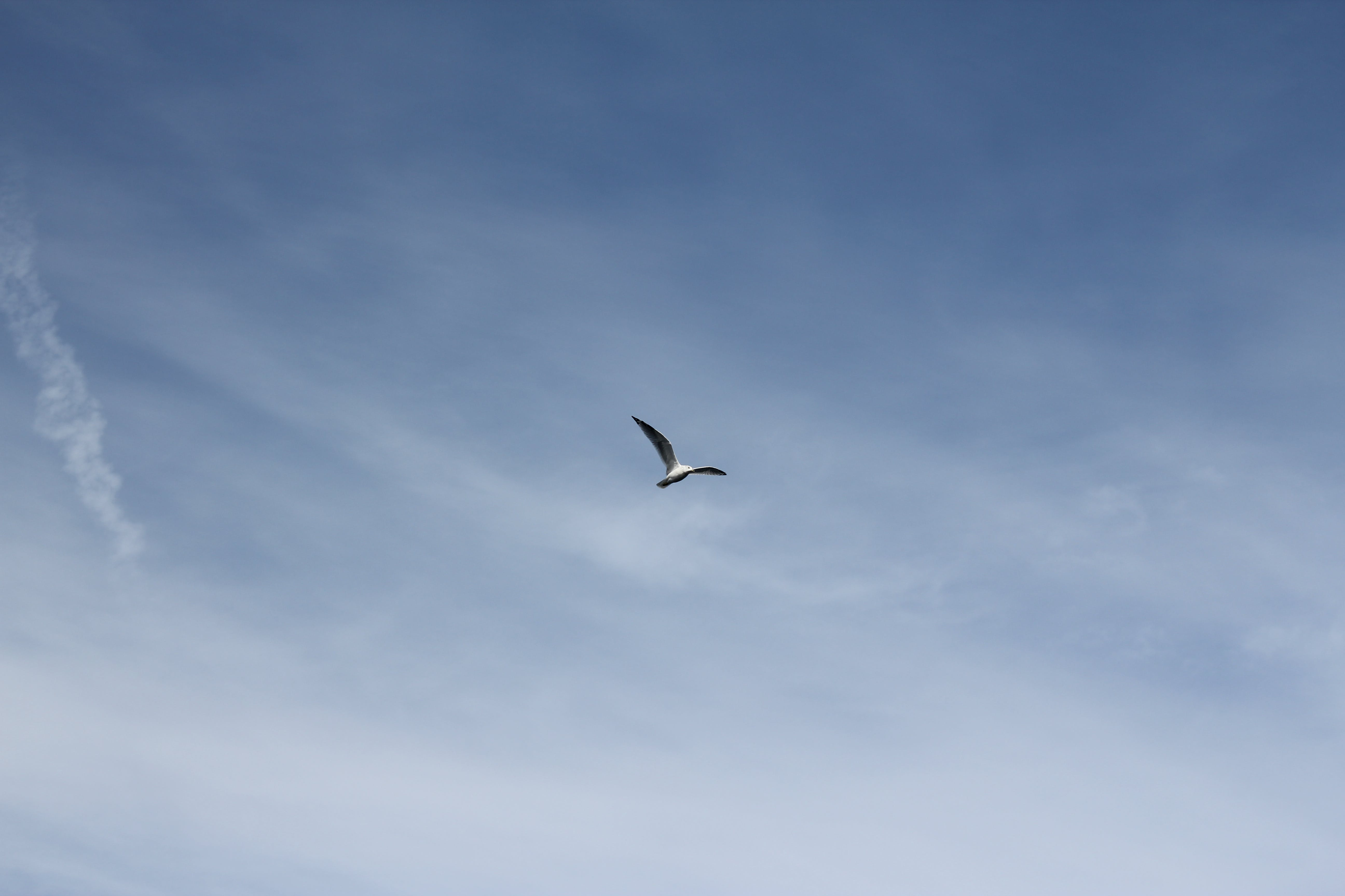 Low Angle Photography of White Bird Flying Under the Blue Sky