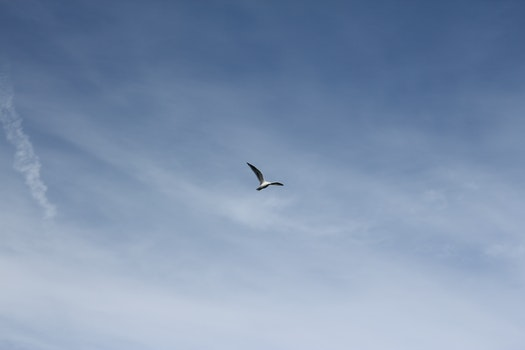 Free stock photo of sky, bird, flying, seagull