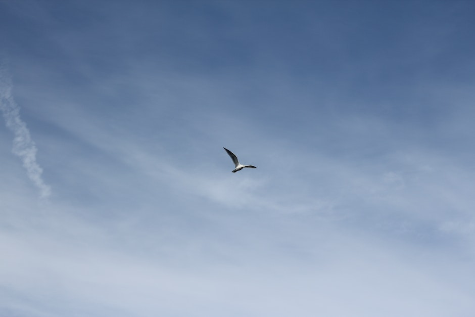 bird, flying, seagull