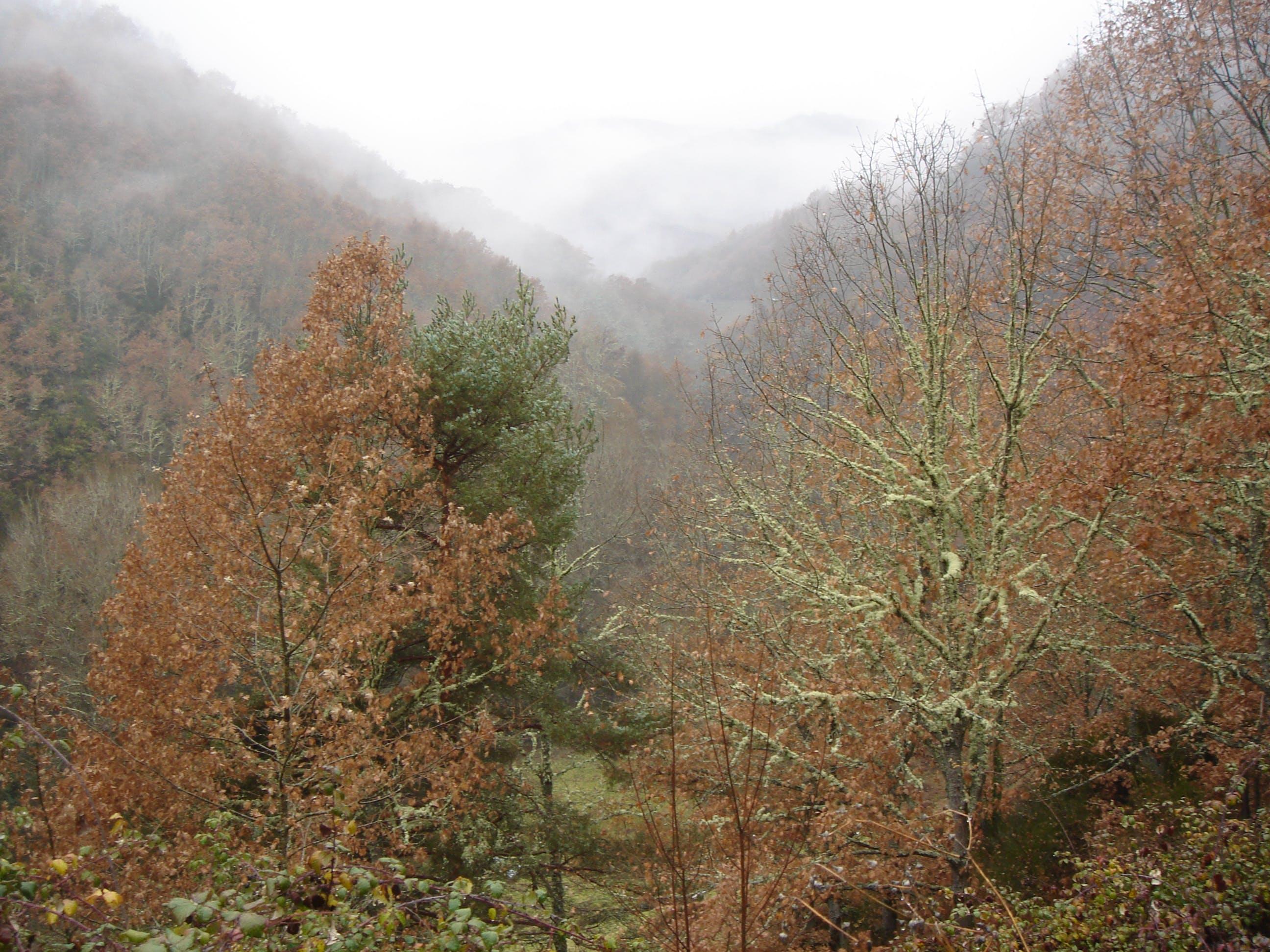 Free stock photo of bosque