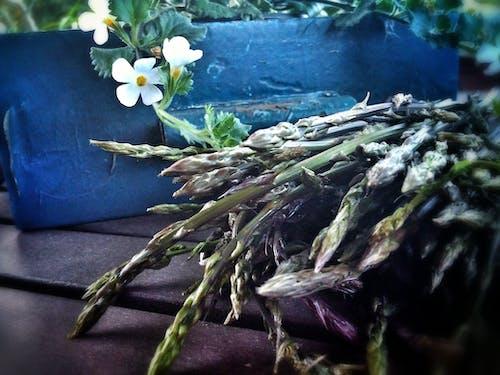 Immagine gratuita di asparago, proljeä † e, sparoge