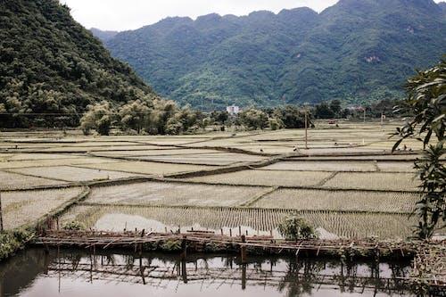 골짜기, 농경지, 농장의 무료 스톡 사진