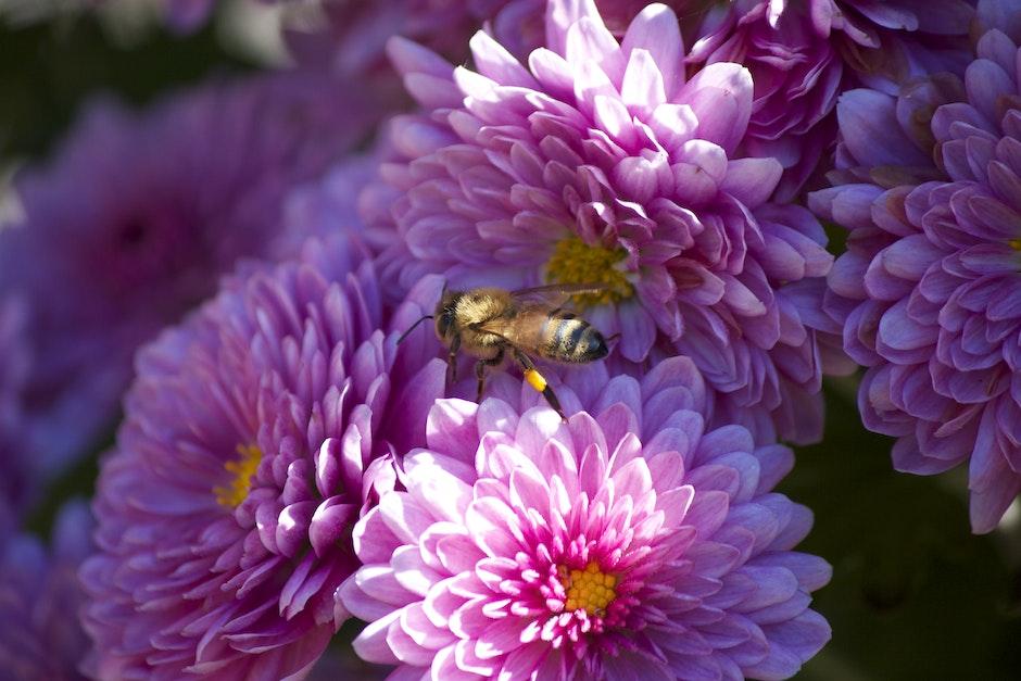 bee, flower, pink