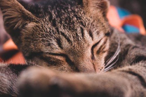 Free stock photo of animal, cat, sleeping
