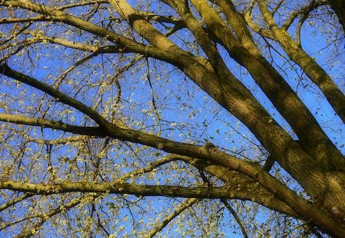 ニューグリーン, 春, 木の無料の写真素材