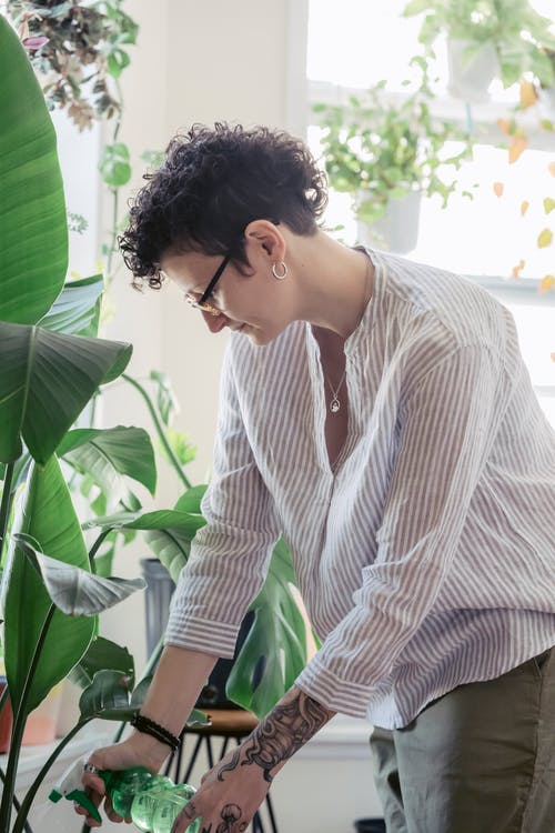 Tattooed woman in eyewear spraying tropical plant at home