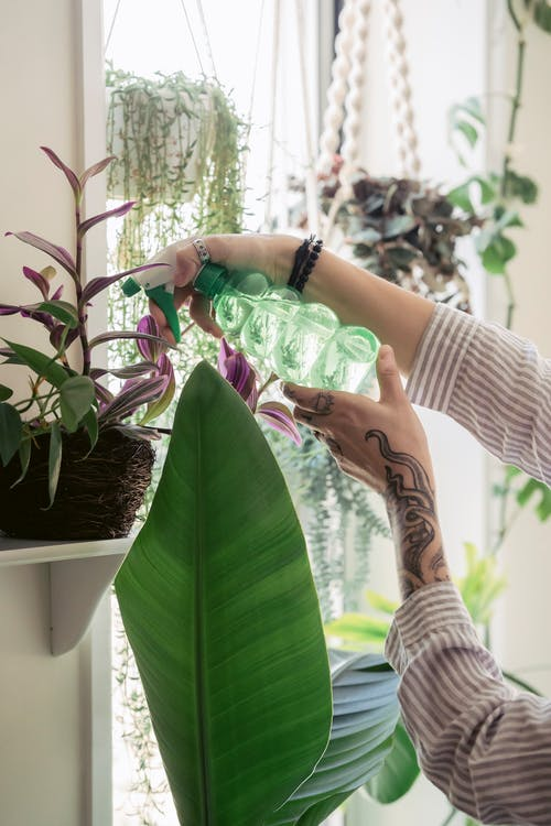 Unrecognizable woman taking care of potted plants in light apartment