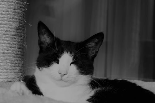 Black and White Cat on Black and White Textile