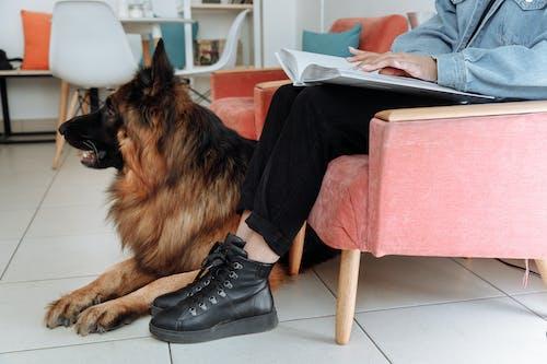 german shepherd intelligent discipline breed
