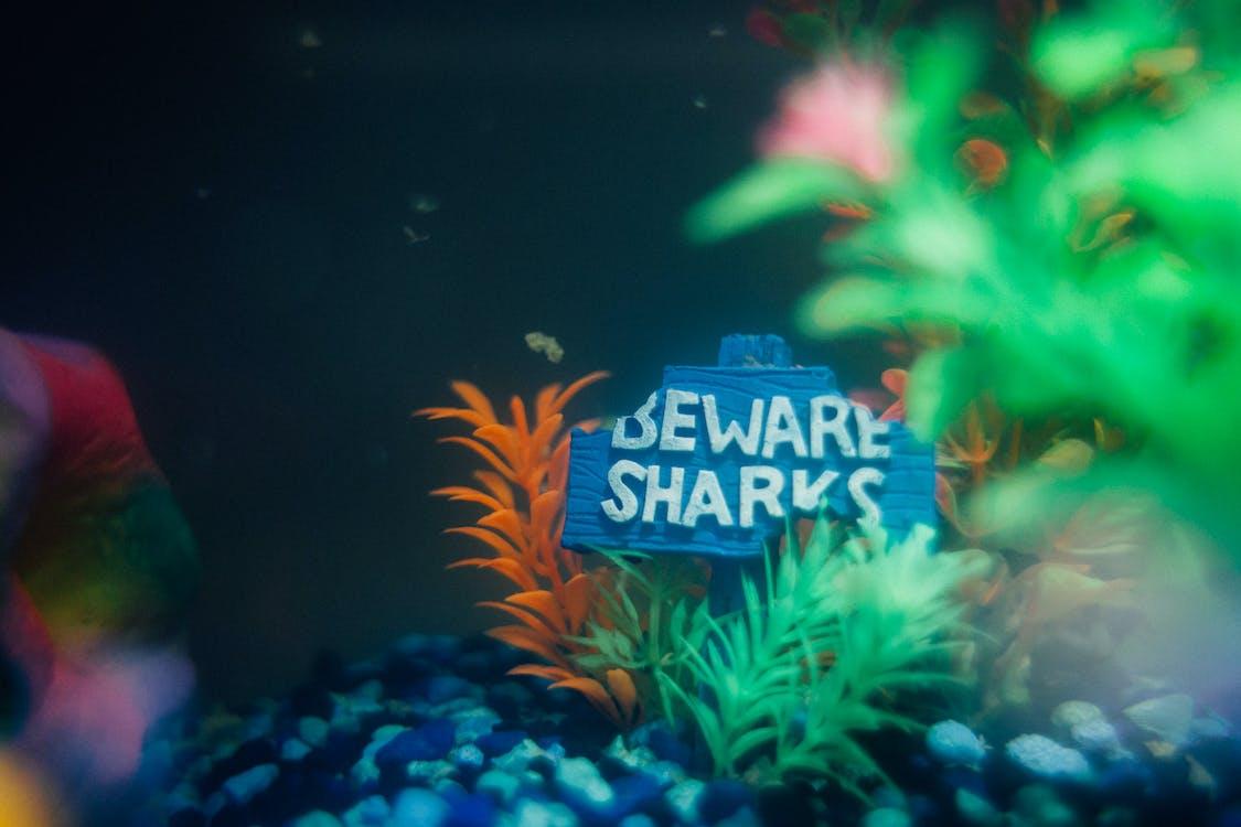 Free stock photo of fish tank, vsco