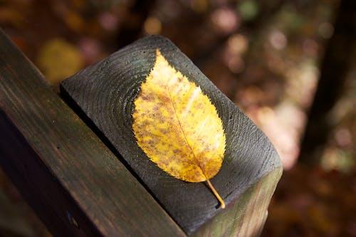 Brown Leaf on Lumber