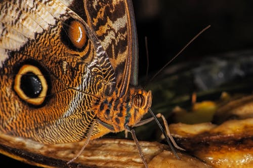 Closeup of owl butterfly with spots on wings standing on flower pestle in nature