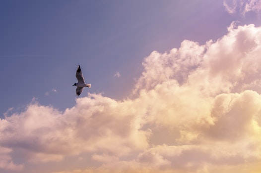 White Bird Flying Under Cloudy Sky during Daytime