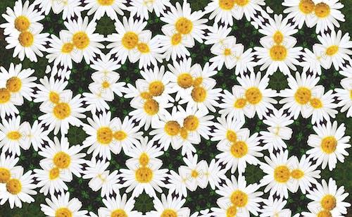 Immagine gratuita di caleidoscopio, design, fiori