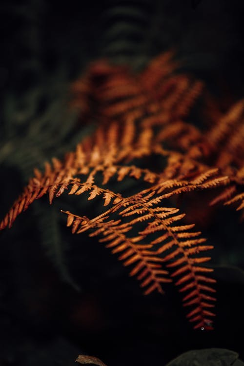 Dry fern leaves with curved stems in forest