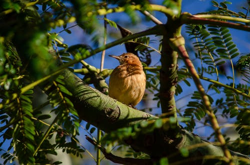 Free stock photo of bird, birdwatching, blue