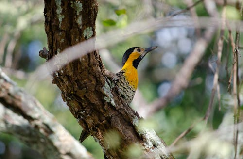 Free stock photo of bird, birdwatching, branch