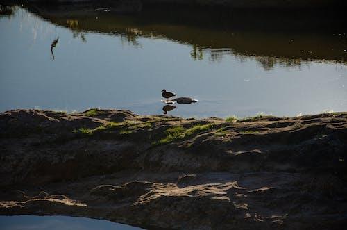 Free stock photo of bird, birdwatching, dusk