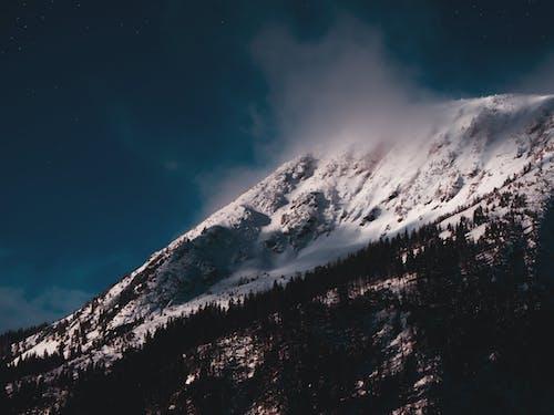 Immagine gratuita di alba, albero, arrampicarsi