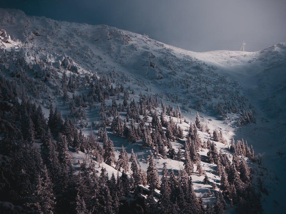 Darmowe zdjęcie z galerii z deska snowboardowa, dolina, drewno