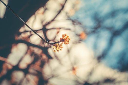 Kostenloses Stock Foto zu blühen, blühende pflanze, frühling