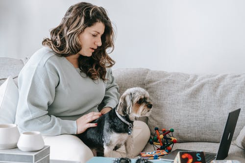 Young female owner with wavy hair in casual clothes sitting on comfy sofa and stroking adorable Yorkshire Terrier dog while watching together interesting movie on laptop at home