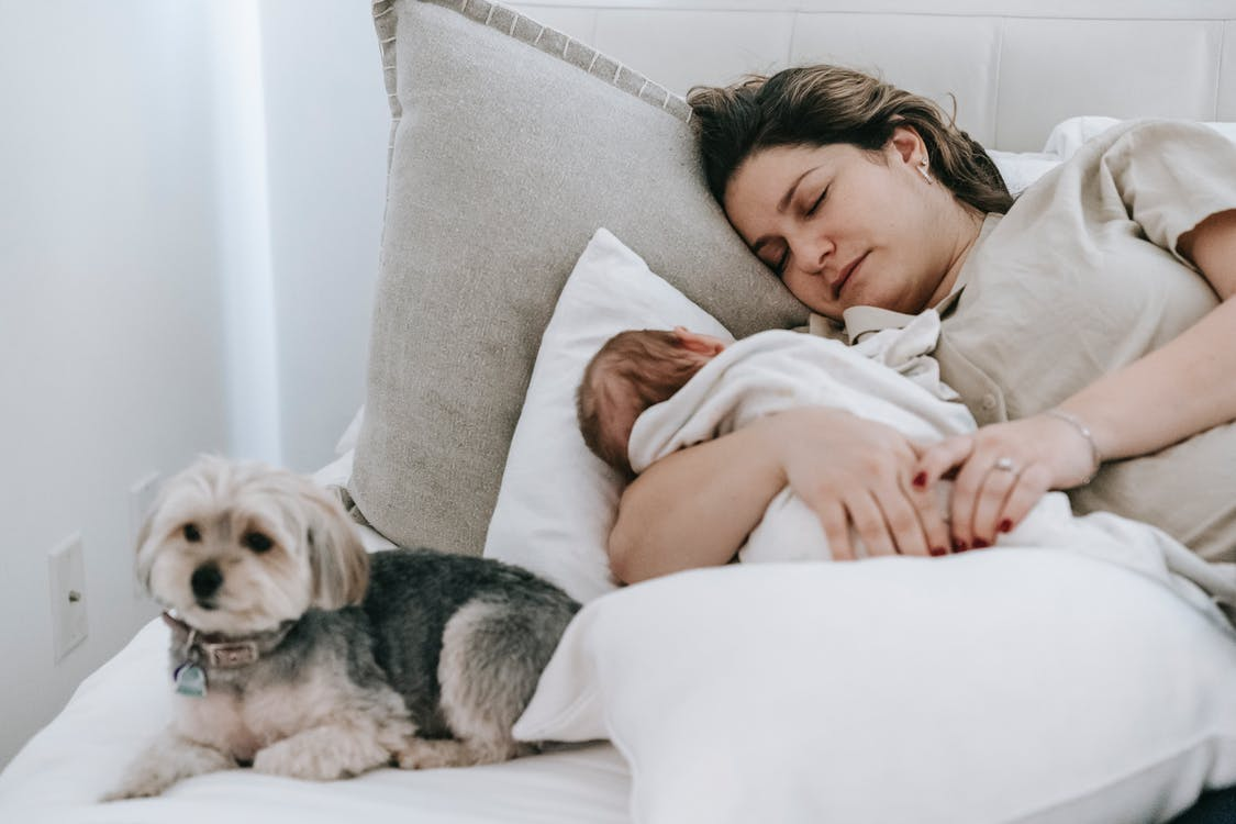 Caring mother with cute newborn baby sleeping peacefully on comfortable bed near adorable hairy morkie in light bedroom at home