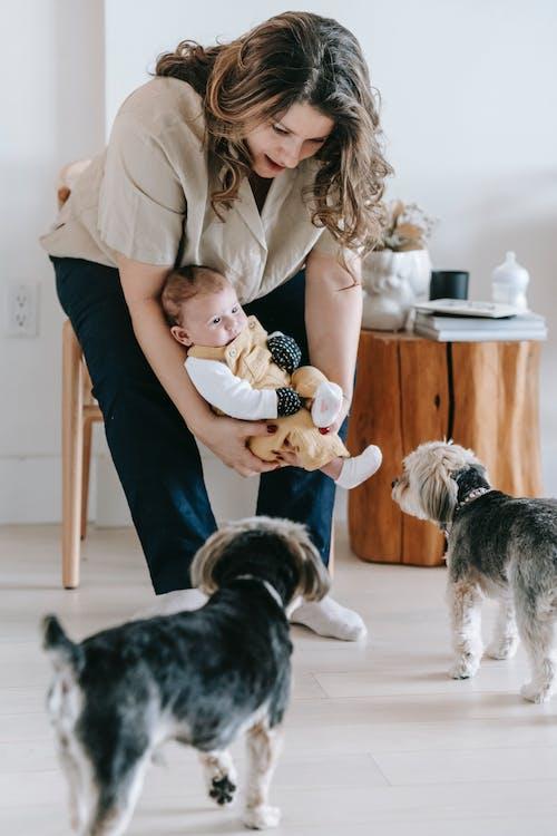 Ingyenes stockfotó állat, anya, anyaság témában