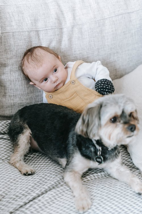 From above of Morkie dog and adorable baby lying together on soft couch