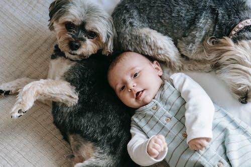 Бесплатное стоковое фото с милый, собака