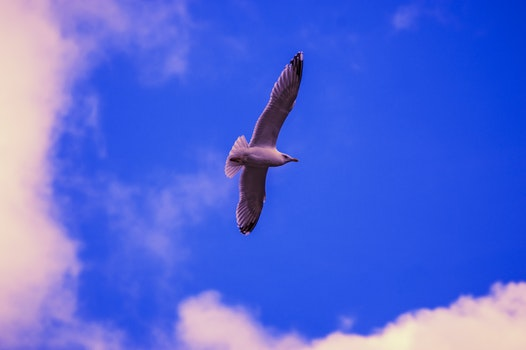 Free stock photo of sun, seagull, fly