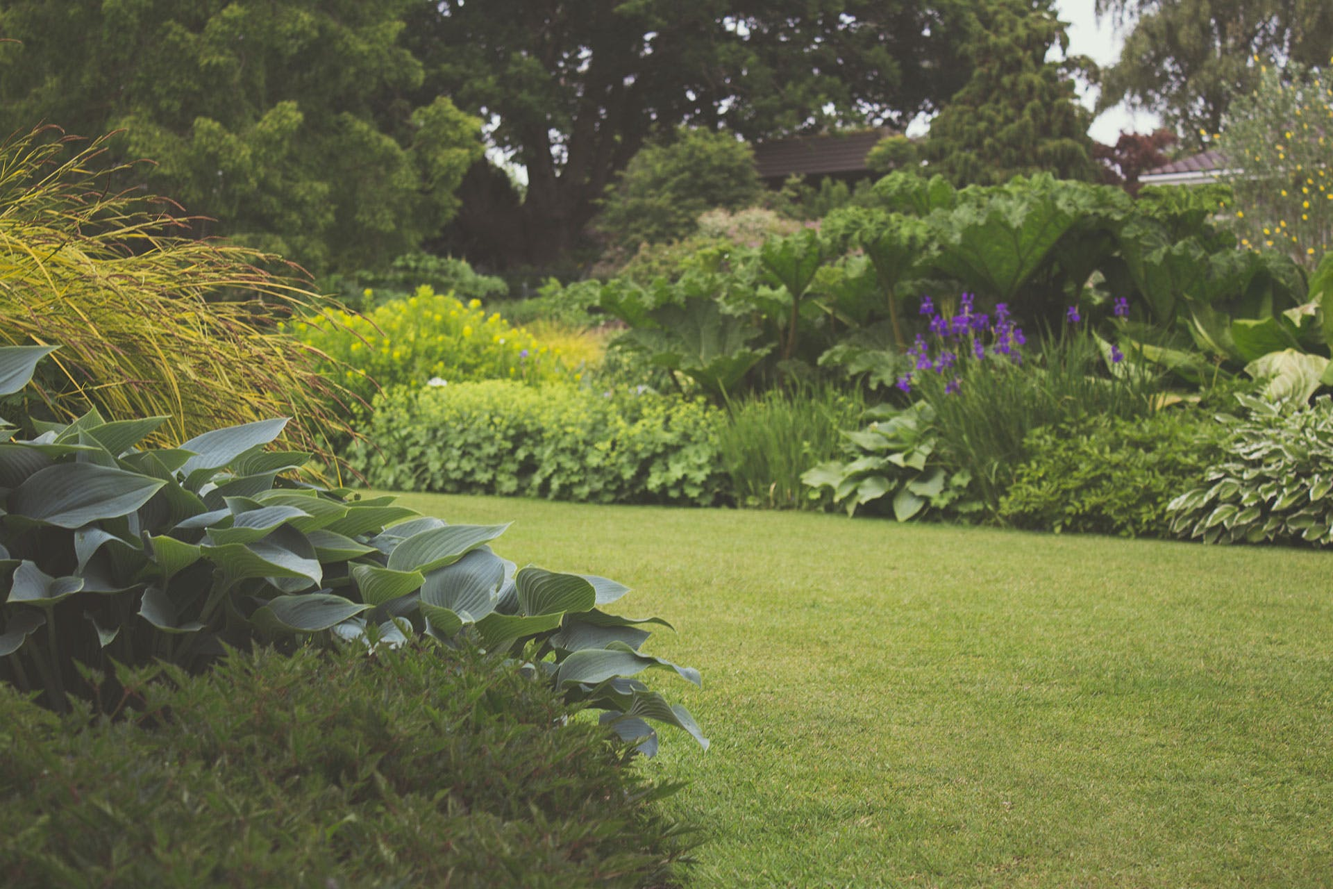Free stock photo of garden, grass, lawn, leaves